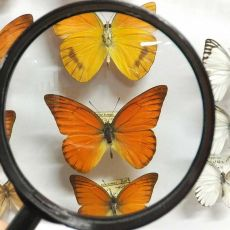 Muzeum Motyli Arthropoda