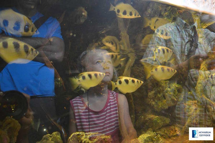 Akwarium Gdyńskie Parki Rozrywki Gdynia Parki Rozrywki Dla